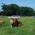 Safari Park Stirling Scotland Image