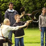 Falconry displays strathblane loch lomond