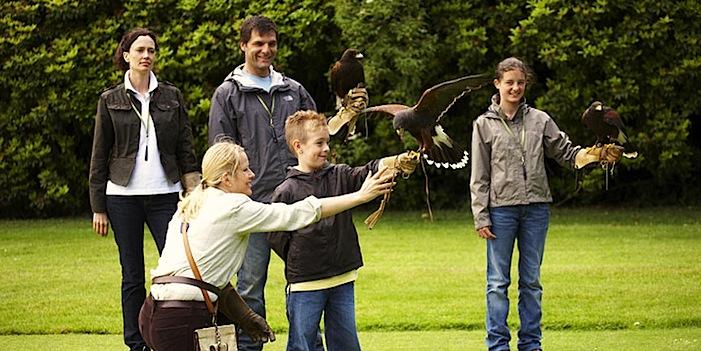 Falconry displays strathblane loch lomond