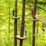 GoApe Adventure Park Aberfoyle Image